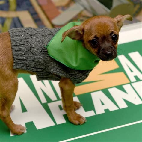 puppy bowl mvp vote puppy bowl xiii 2017 recap mvp highlights and reaction bleacher report