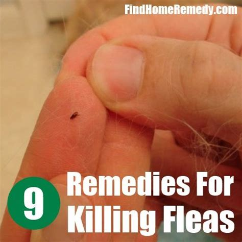 9 home remedies for killing fleas clean and organized