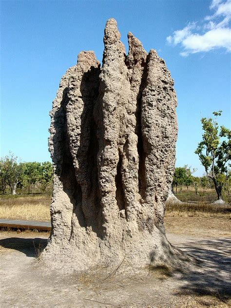 The Amazing Termite by File Termite Cathedral Dsc03570 Jpg