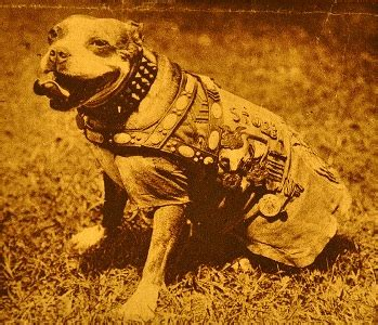 Sergeant Stubby Obituary New York Times Badass Of The Week Sergeant Stubby The War