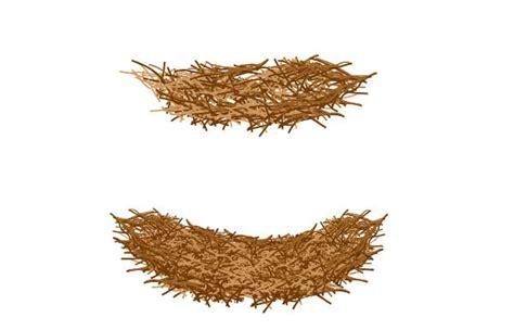 Gradient Nest bird s nest and cracked egg in adobe illustrator web design