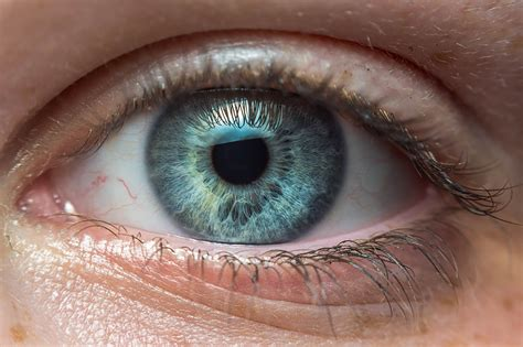 printable brown eyes this simple eye test could be the key to catching autism
