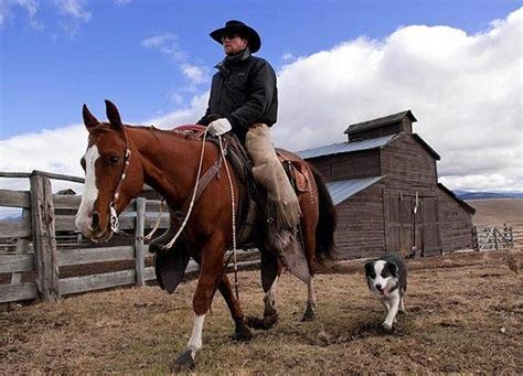 australian cattle cowboys 87 best images about working cow dogs on pinterest a cow