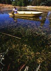 usda boat values usfws pacific kicks off participation in national invasive