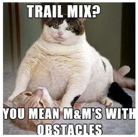Fat Cat Meme - funny fat cat funny pictures quotes memes jokes