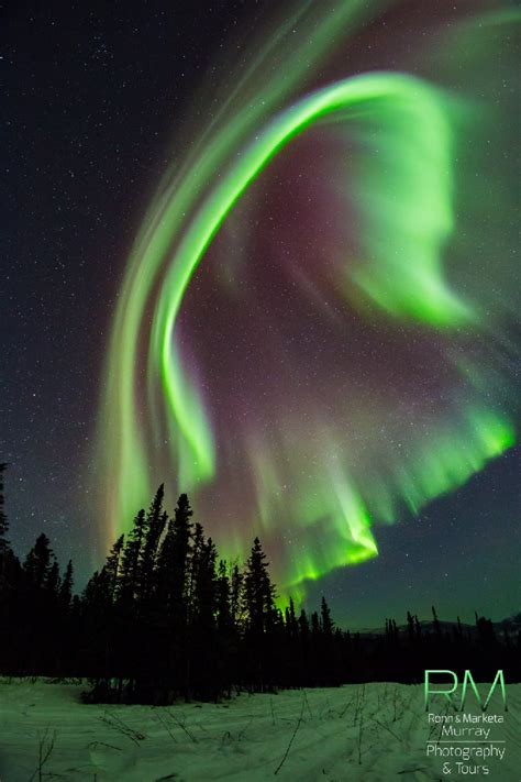 northern lights aurora borealis fairbanks alaska aurora fairbanks alaska northern lights starry