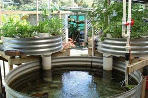 backyard systems aquaponics diy garden compost hydroponics pinterest