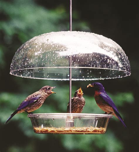 birdfeeding 101 backyard bird lover