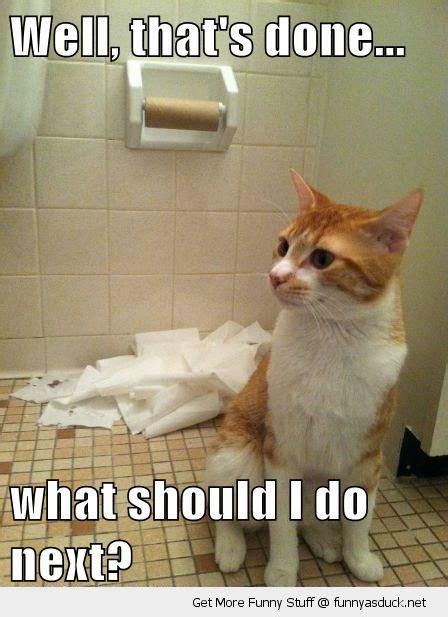 Newspaper Cat Meme - my last 1400 words of nano the iowan