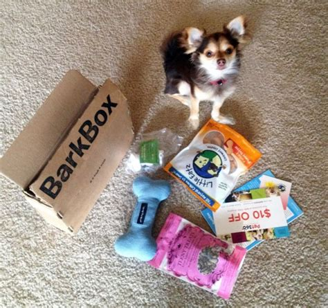 barkbox for puppies what s in a barkbox march 2013