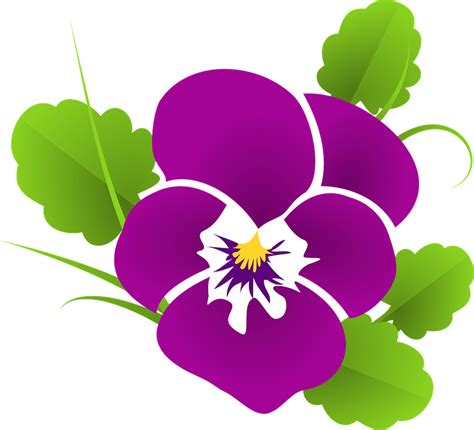 violet clipart pansy violet viola 183 free vector graphic on pixabay