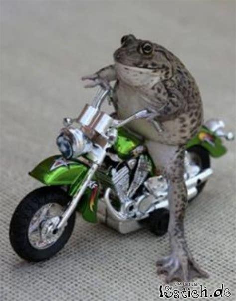 Lustige Motorrad Spiele by Das Lustige Google Spiel Seite 169 Allmystery