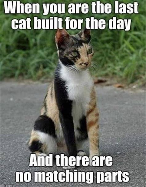 funny animal memes   day  pics