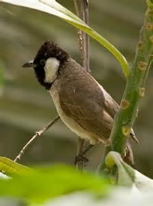 uae birds