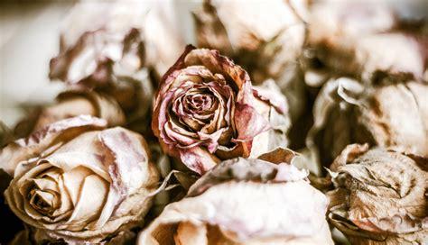 imagenes de flores marchitas pornograf 237 a s 225 dica presente en los feminicidios de ciudad