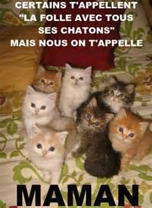 Chat vraiment trop drole - Image drôle - Animaux Chats