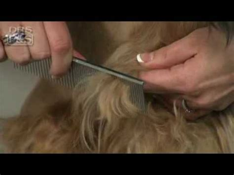 How To Remove Mats From A Cat by How To Remove Mats In Your S Fur Drsfostersmith