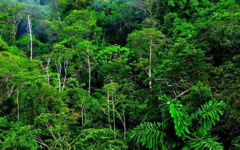 por una gentil floresta 8426374646 alternativas para cuidar el medio ambiente los bosque