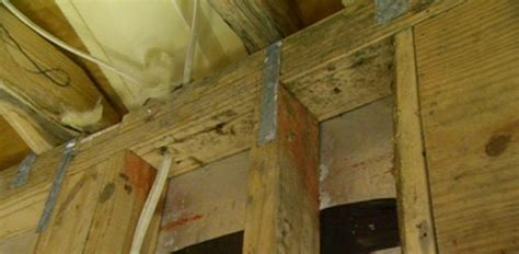 removing mold from basement breathe easy at home preventing and detecting mold