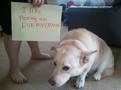 bad puppy behavior dogshaming a viral photo craze where dogs confess their bad behavior