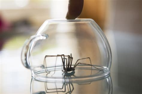 How To Keep Spiders Away From Your Bed by How To Keep Spiders Away From Your Home Pest