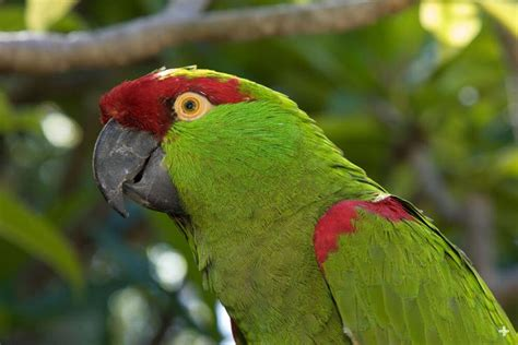 parrot san diego zoo animals plants
