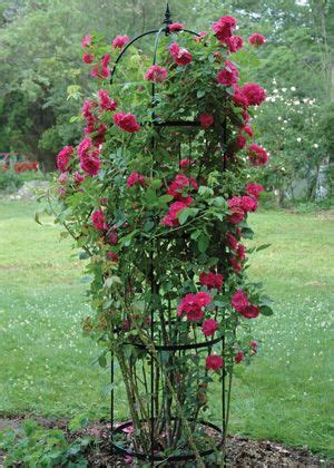 ideas for climbing rose supports medium pillar obelisk uprights are solid steel rods powder coated black and topped with