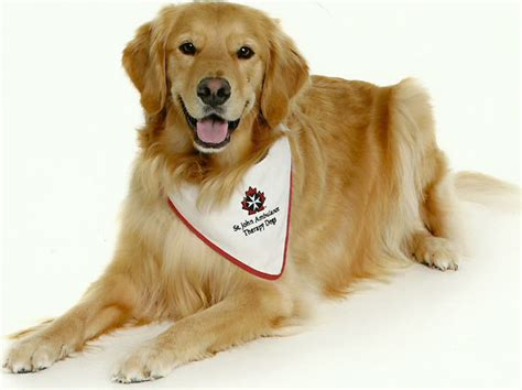 canine comfort four legged volunteers provide canine comfort western