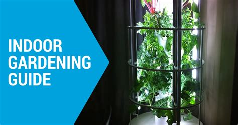 Livingroom Lights everything you need to know about indoor gardening