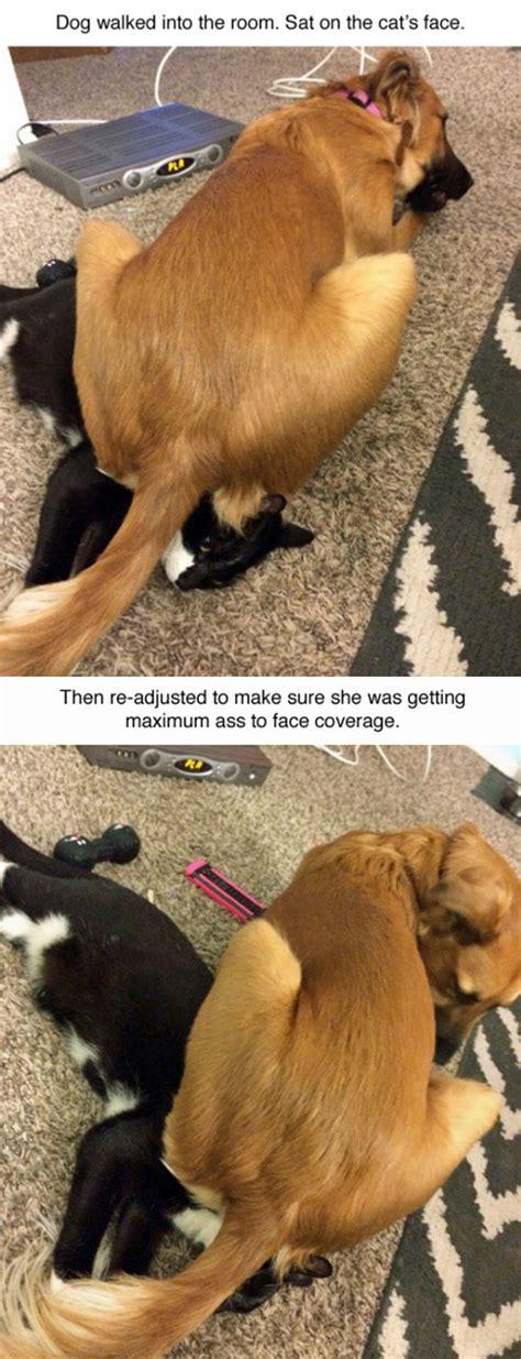 animals caught  complete jerks