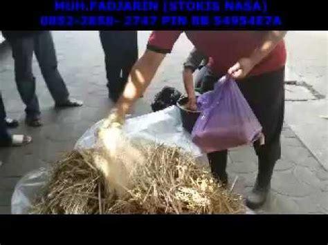 Obat Fermentasi Pakan Ternak Ayam ternak sapi bandung obat penggemuk ayam pedaging