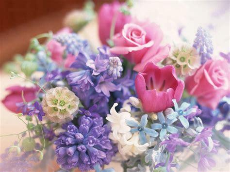 imagenes flores jpg fondos de pantalla gt imagenes gt flores