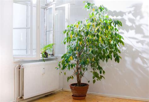 Vasi Da Appartamento by Le Migliori Piante Per Purificare L In Casa Secondo