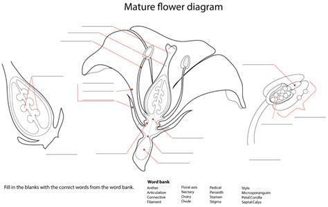 parts of flower diagram diagrams of flower parts diagram site
