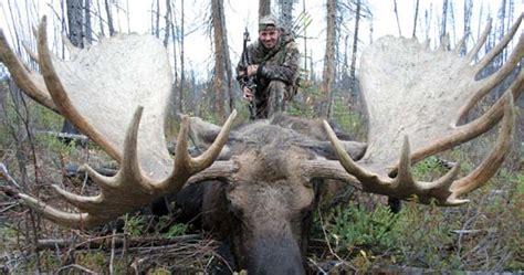 Record Moose Rack by Matelic Image Moose