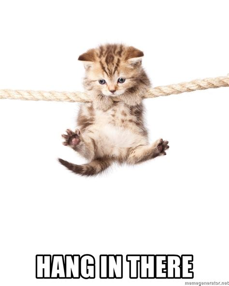 Hang In There Cat Meme - hang in there hang in there kitty cat meme generator