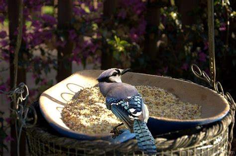 bird feeding time desicomments com