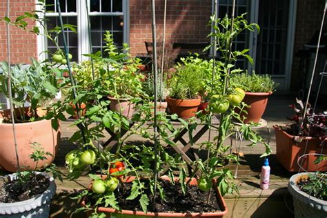 Urban Container Flower And Vegetable Gardening With