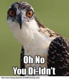 Funny No Meme - oh no meme funny animal lol meme pinterest dr