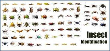 house pest common insect and bug identification american pest solutions