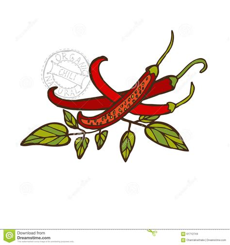 Chili S Gift Card Can Be Used At - hand drawn vegetable stock vector image 61712744