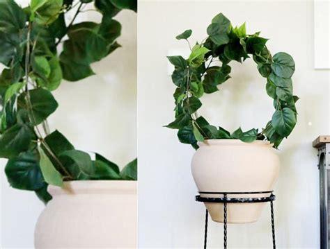 vine topiary vine topiary