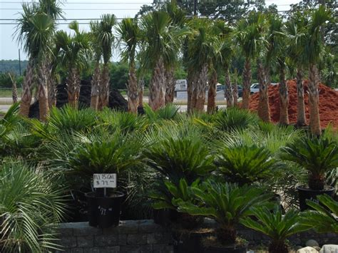 landscaping columbia sc garners ferry landscape supply mulch columbia sc palm