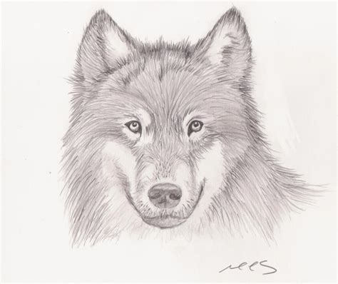 wolves drawings wolf drawing by mhylands on deviantart