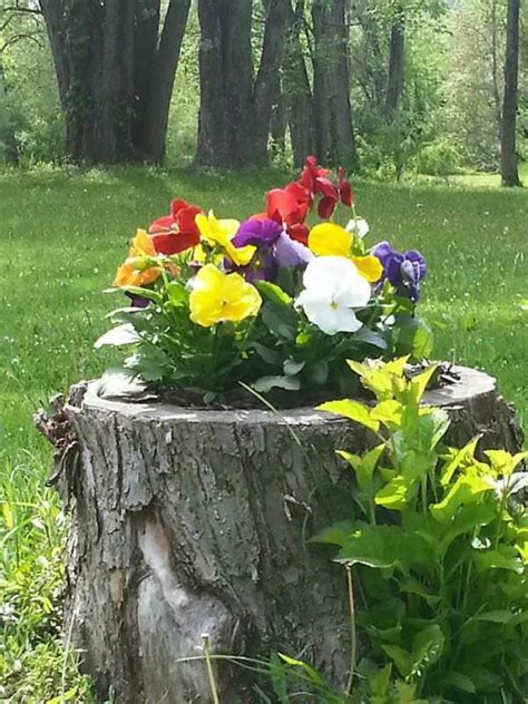 18 tree stumps turned into beautiful flower planters