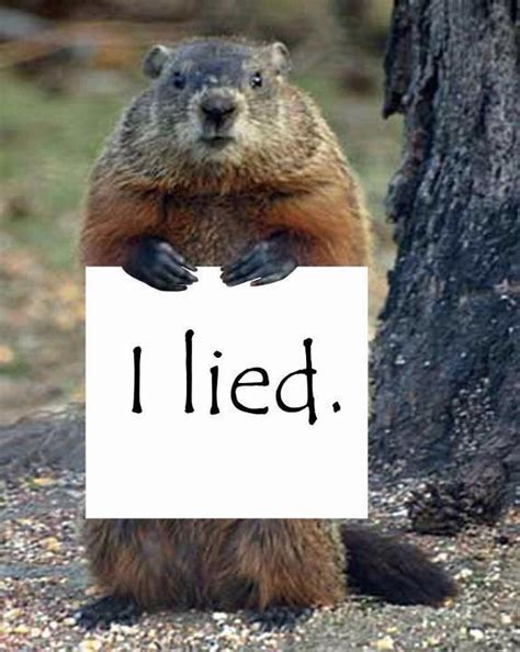 groundhog day phil weather groundhog phil indicted accused of lying as