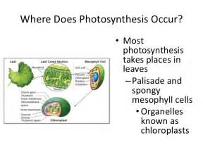 photosynthesis light dependent reactions