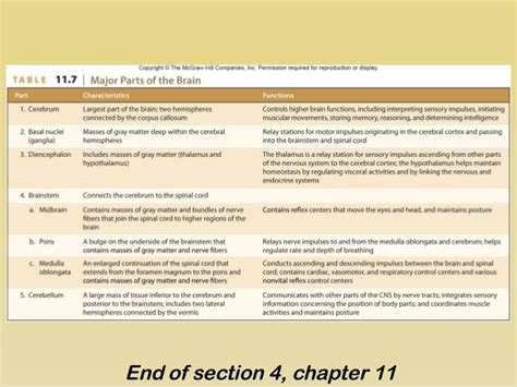 chapter 11 section 4 section 4 chapter 11 brainstem
