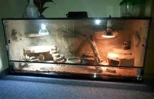 leopardgecko beleuchtung leopardgecko haltung im terrarium