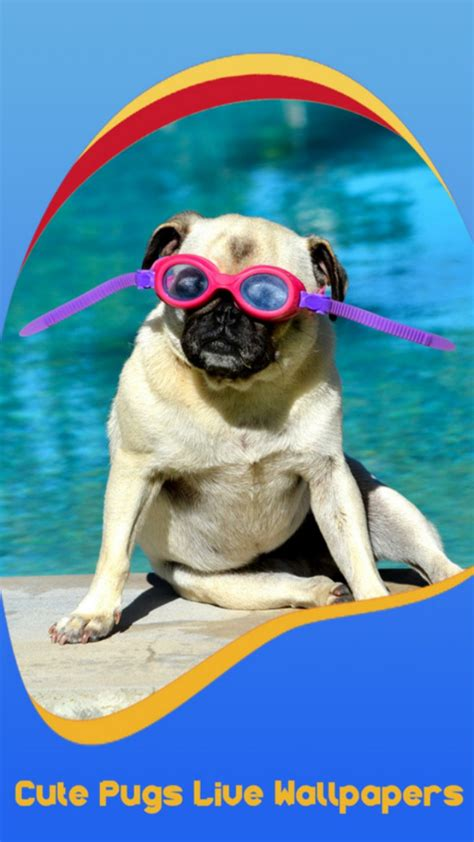 pug live wallpaper pugs live wallpapers